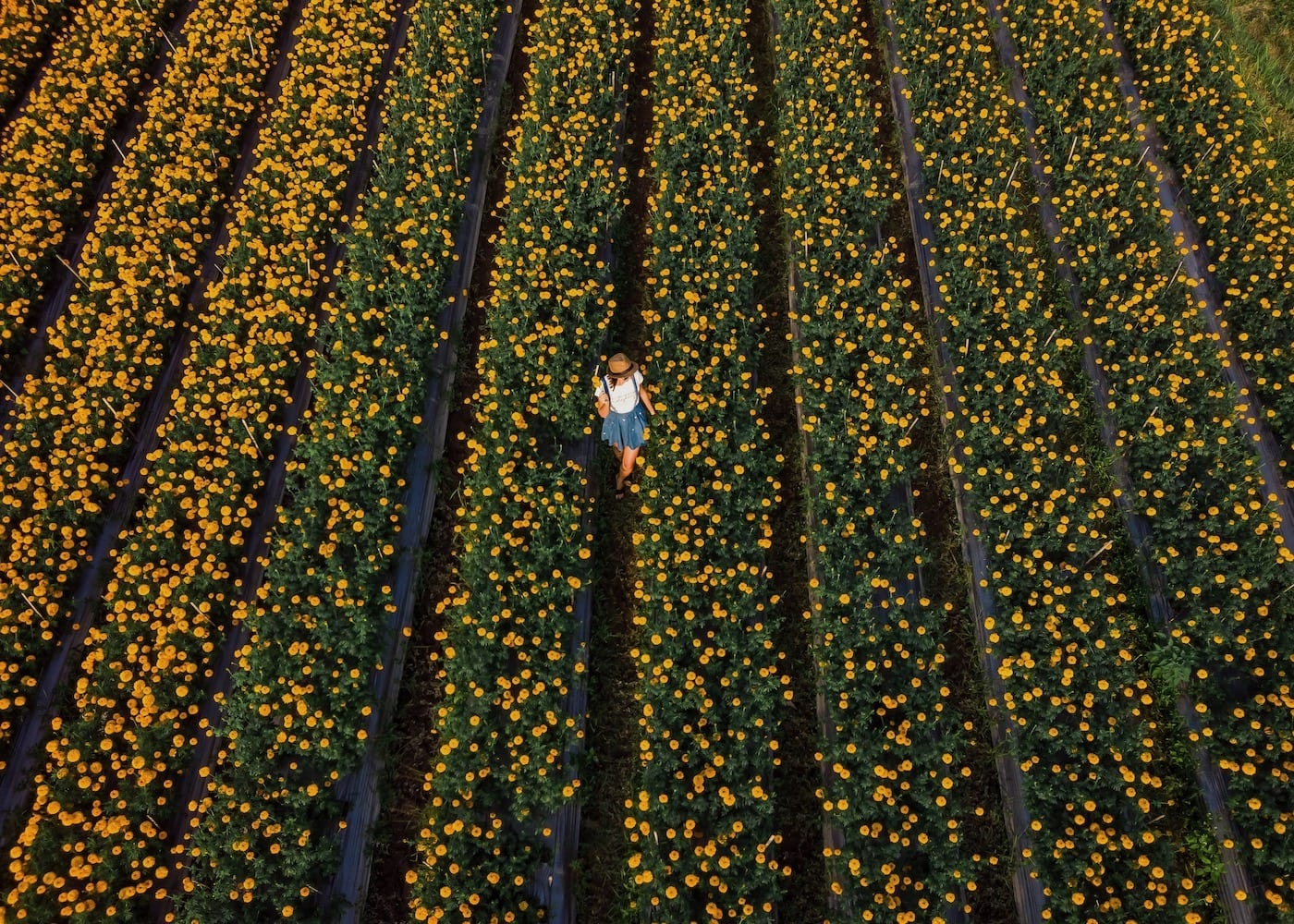 Most-beautiful-places-in-Bali-instagrammable-destinations-Marigold-Field