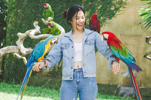 bali-bird-park
