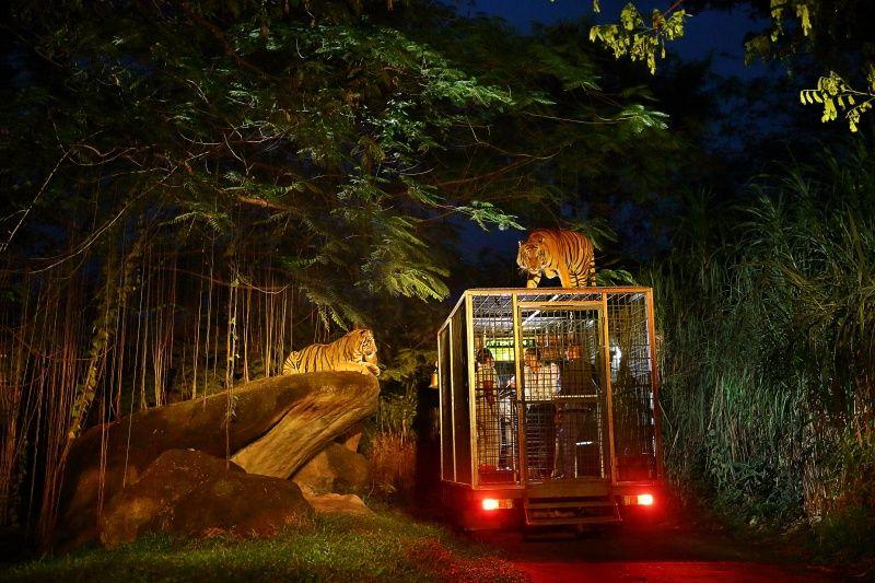 berani-menantang-nyali-di-safari-night-di-bali-b3tTuj46wU